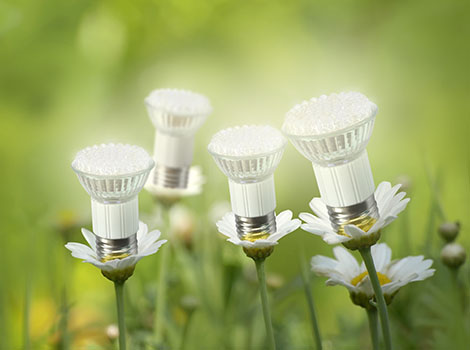 Led Bulbs Flowers Grass | GreenBee